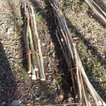 Hedging Stakes / Bean Poles